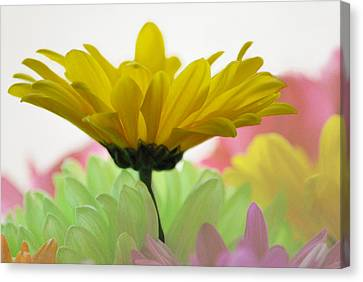 Burst Of Color Canvas Print