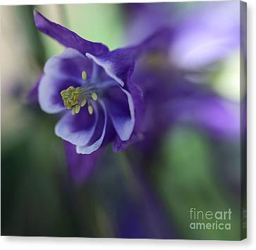 Burst Of Nature Canvas Print by Mary Lou Chmura