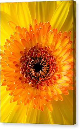 Burst Of Sunshine Canvas Print by Shelby  Young