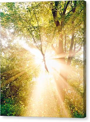 Burst Of White Light Through Green Trees Canvas Print by Panoramic Images