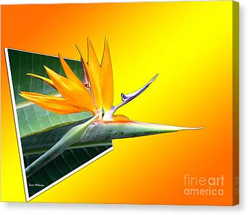 Bursting Out Of The Box Canvas Print by Sue Melvin
