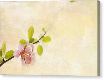 Pink Blossoms Canvas Print - Bursting Out by Rebecca Cozart
