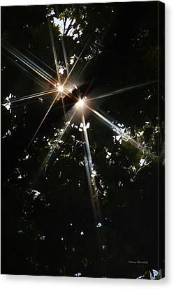 Bursting Through Trees Canvas Print by Donna Blackhall