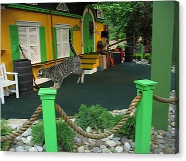 Busch Gardens - Animal Show - 121239 Canvas Print by DC Photographer