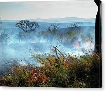 Bush Fire Canvas Print by Bildagentur-online/mcphoto-schaef