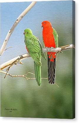 Bush Monarchs - King Parrots Canvas Print by Frances McMahon