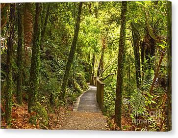 Bush Pathway Waikato New Zealand Canvas Print by Colin and Linda McKie