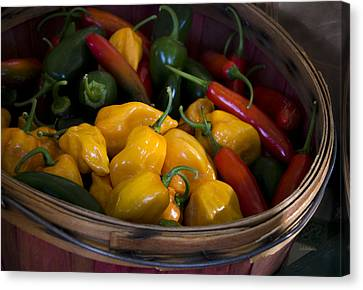 Locally Grown Canvas Print - Bushel Of Peppers by Julie Palencia