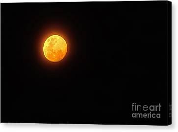 Bushfire Moon Canvas Print by Kaye Menner