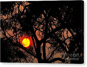 Bushfire Sunset Canvas Print
