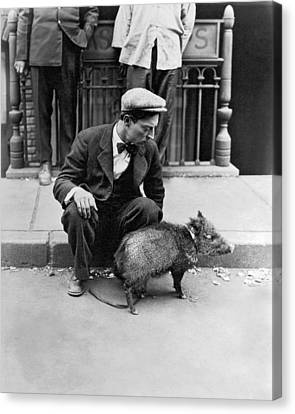 Buster Keaton With A Peccary Canvas Print by Underwood Archives
