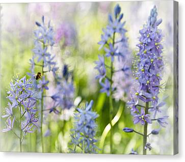 Busy Bee Canvas Print by Annette Hugen