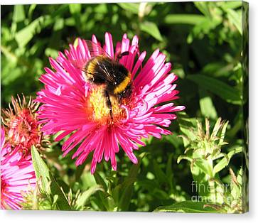 Canvas Print featuring the photograph Busy Bee by Bev Conover