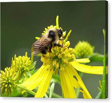 Busy Bee Canvas Print by Lynn Berney