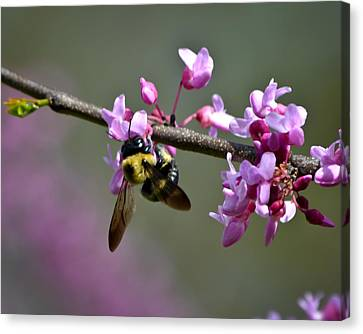 Busy Bee On The Bud Canvas Print