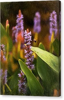 Busy Bee Canvas Print by Richard Rizzo