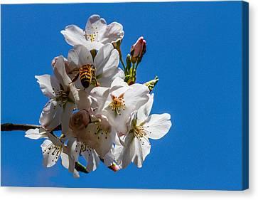 Busy Bee Canvas Print by Robert Hebert