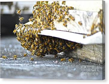 Busy Bees Canvas Print by Laura Forde