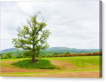But Only God Can Make A Tree Canvas Print by Semmick Photo