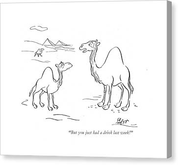 Camel Canvas Print - But You Just Had A Drink Last Week! by Ed Nofziger
