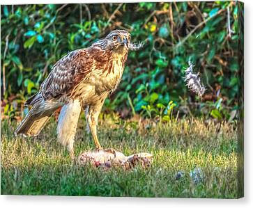 Canvas Print featuring the photograph Buteo Jamaicensis by Rob Sellers