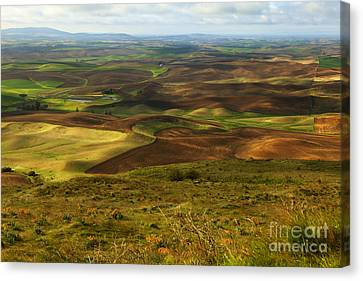 Butte With A View Canvas Print