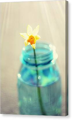Buttercup Photography - Flower In A Mason Jar - Daffodil Photography - Aqua Blue Yellow Wall Art  Canvas Print by Amy Tyler