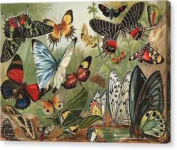 Butterflies 2 Canvas Print by Mutzel
