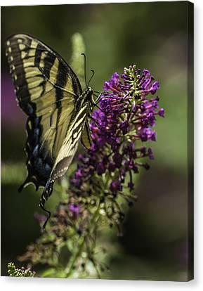 Butterflies Along The Blue Ridge Canvas Print