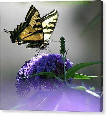 Canvas Print featuring the photograph Butterflies Are Free by Debra Kaye McKrill