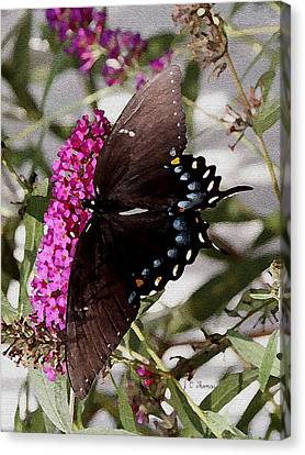 Canvas Print featuring the photograph Butterflies Are Free by James C Thomas