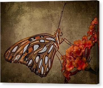 Canvas Print featuring the photograph Butterflies Are Free by Linda Karlin