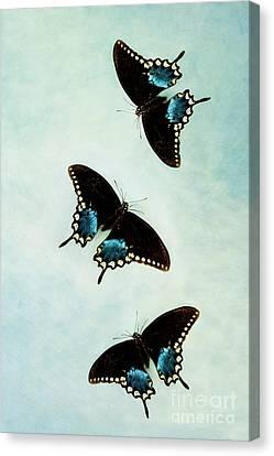 Butterflies In Flight Canvas Print by Stephanie Frey