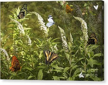 Butterflies In Golden Garden Canvas Print by Belinda Greb