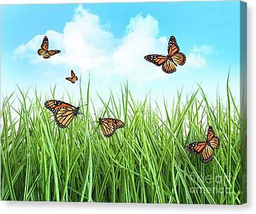 Butterflies In Tall Wet Grass  Canvas Print by Sandra Cunningham