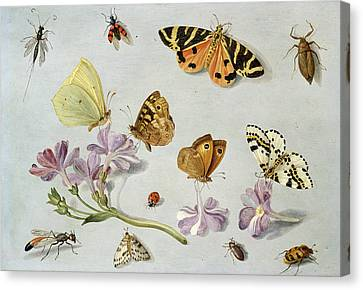 Butterflies Canvas Print by Jan Van Kessel