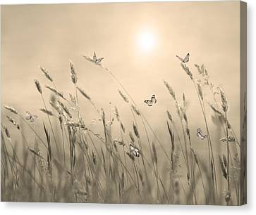 Canvas Print featuring the digital art Butterflies by Nina Bradica