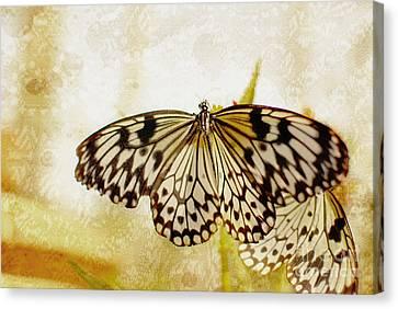 Butterflies On Lace Canvas Print by Floyd Menezes