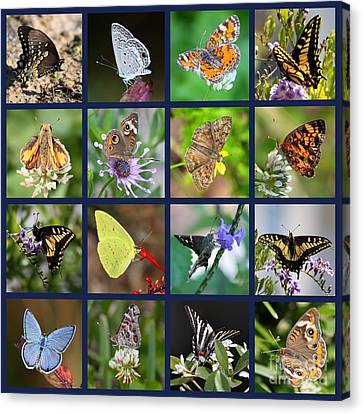 Butterflies Squares Collage Canvas Print by Carol Groenen