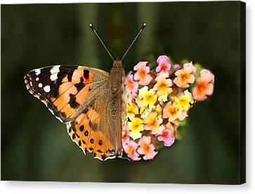 Butterflower Canvas Print by Meir Ezrachi