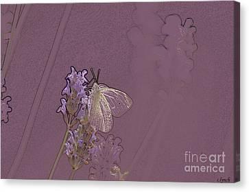 Butterfly 1 Canvas Print by Carol Lynch