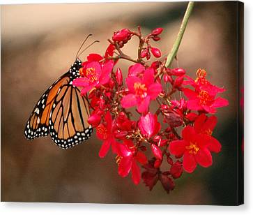 Canvas Print featuring the photograph Butterfly 1 by Leticia Latocki