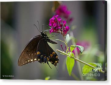Canvas Print featuring the photograph Butterfly 1 by Tannis  Baldwin