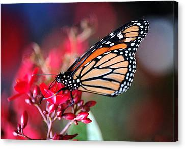 Canvas Print featuring the photograph Butterfly 2 by Leticia Latocki