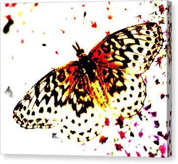 Butterfly 4 Canvas Print by John Feiser