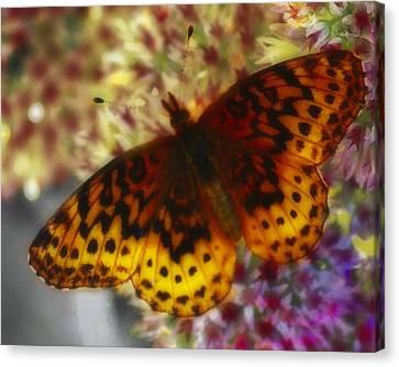 Butterfly 5 Canvas Print by John Feiser
