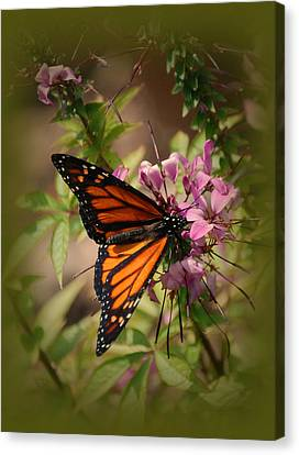 Canvas Print featuring the photograph Butterfly 5 by Leticia Latocki