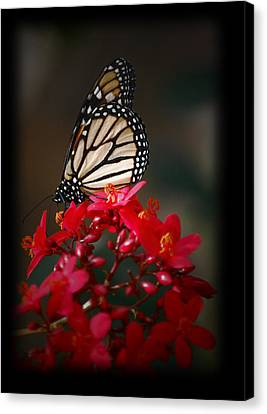 Canvas Print featuring the photograph Butterfly 6 by Leticia Latocki