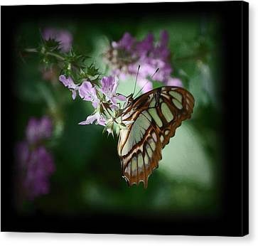 Canvas Print featuring the photograph Butterfly 7 by Leticia Latocki