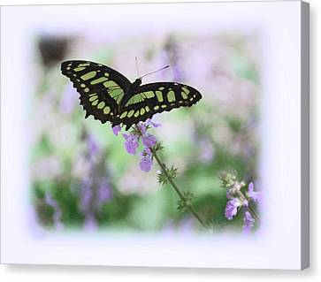 Canvas Print featuring the photograph Butterfly 8 by Leticia Latocki
